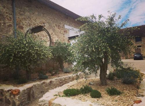 Cours Lieu de Mariage, Séminaire : l'olivier
